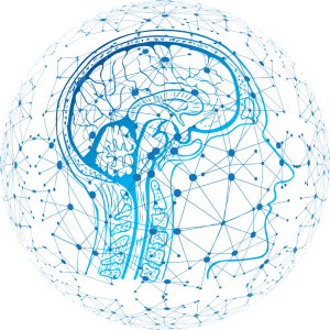 Neural connections within the brain